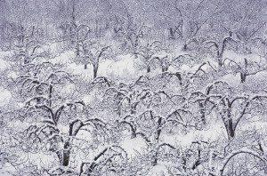 tipsfromtia.com winter tree