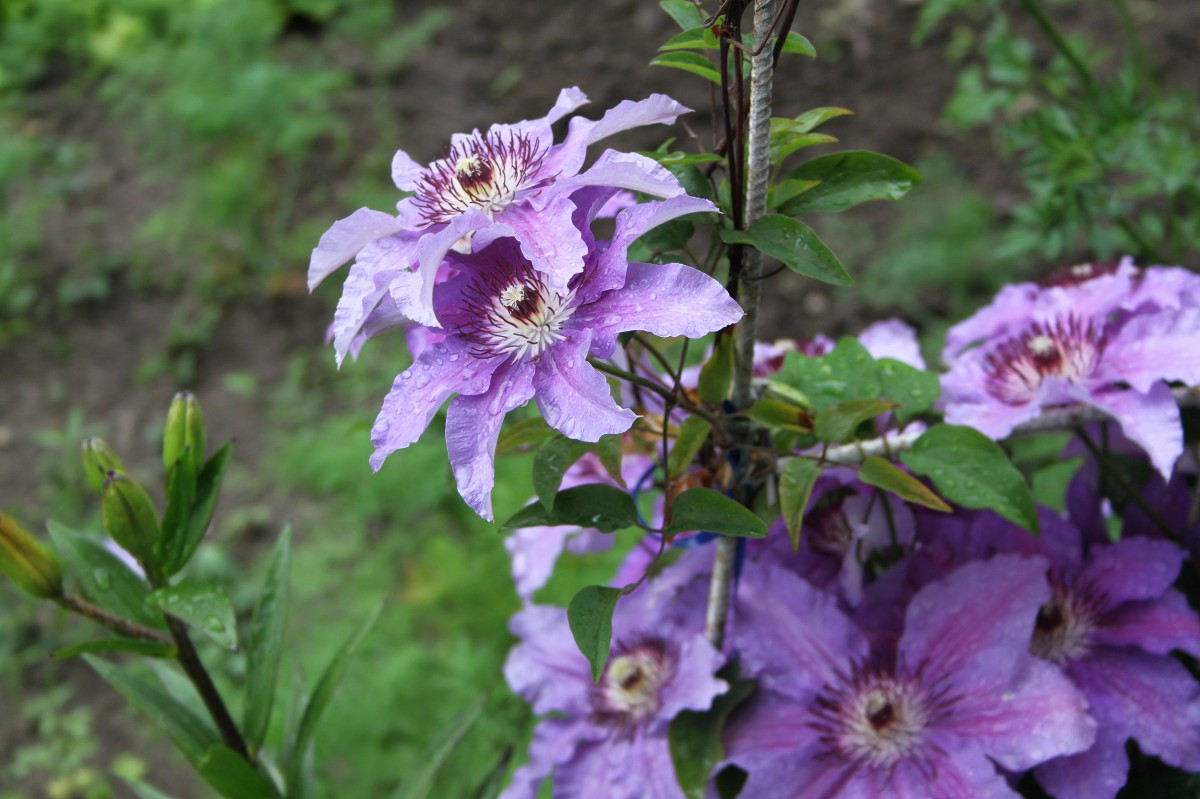 Fill Your Fall Garden With Late Blooming Perennials Tipsfromtia